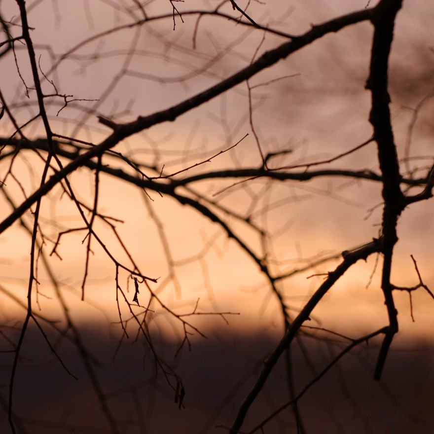 Limbs at Sunset | Riverbend Park
