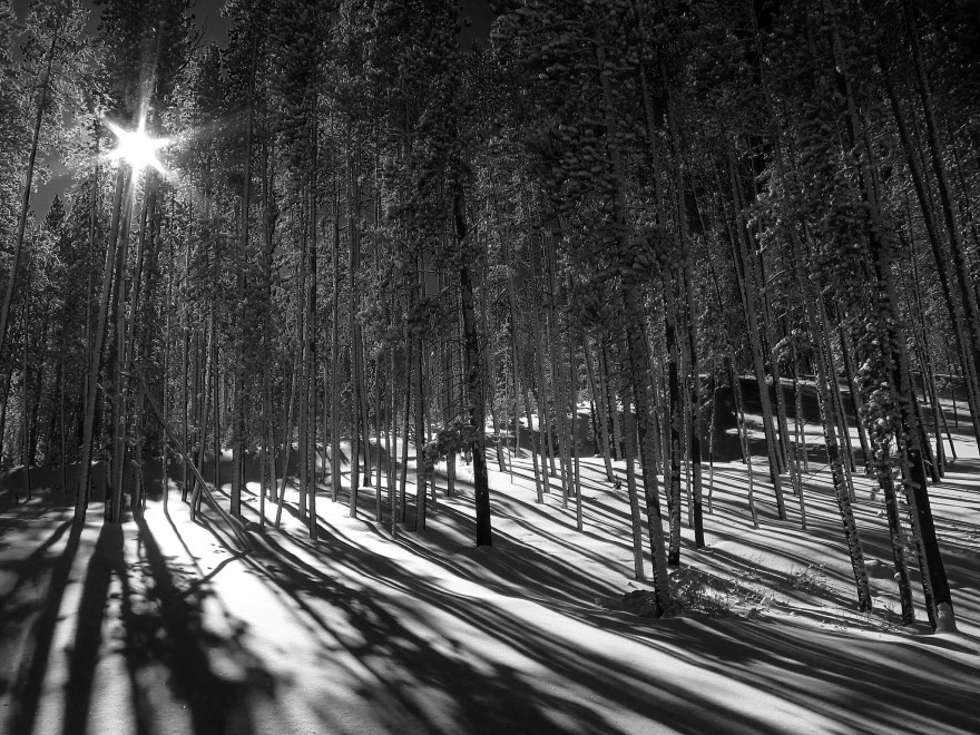Snow and Trees | Breckenridge
